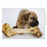 Great Dane puppy with bone in studio Card