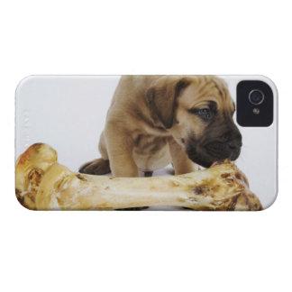 Great Dane puppy with bone in studio Case-Mate iPhone 4 Case