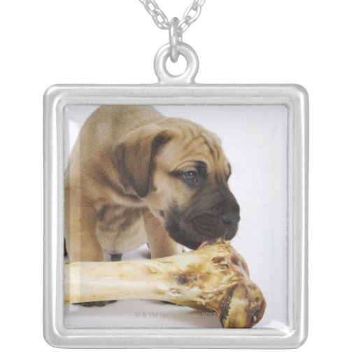 Great Dane puppy with bone in studio Personalized Necklace