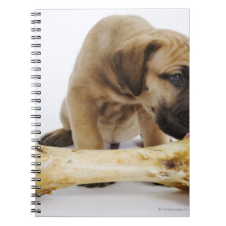Great Dane puppy with bone in studio Notebook