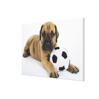 Great Dane puppy with toy soccer ball Canvas Print