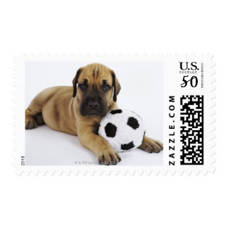 Great Dane puppy with toy soccer ball Postage