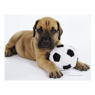 Great Dane puppy with toy soccer ball Postcard