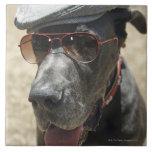 Great dane que lleva el gorra y las gafas de sol azulejo ceramica