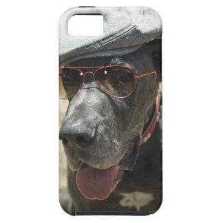 Great dane que lleva el gorra y las gafas de sol iPhone 5 protectores