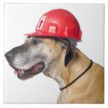 Great dane que lleva un casco rojo de la construcc tejas