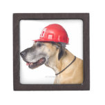 Great dane que lleva un casco rojo de la construcc caja de joyas de calidad