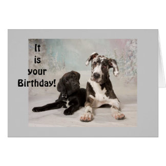 "GREAT DANE SAYS ""ENJOY YOUR BIRTHDAY"" CARD"