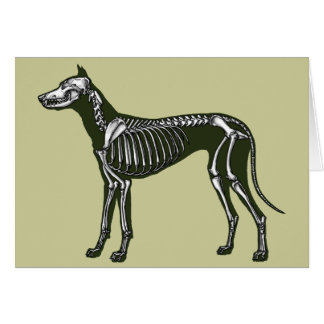 Great Dane skeleton Card