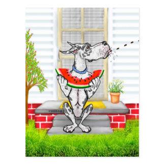 Great Dane SPIT Harlequin Postcard