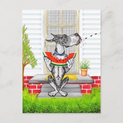http://rlv.zcache.com/great_dane_spit_merleb_postcard-p239431165677140140trdg_400.jpg