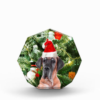 Great Dane w Christmas Tree Gift Boxes Santa Hat