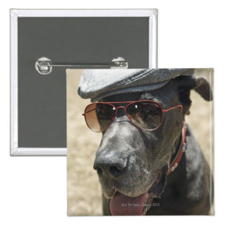 Great Dane wearing hat and sunglasses Button