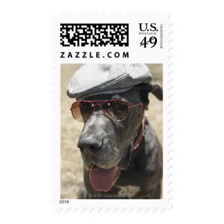 Great Dane wearing hat and sunglasses Postage