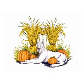 Great Dane White Harvest Postcard