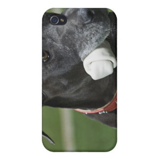 Great Dane with bone Cover For iPhone 4