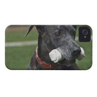 Great Dane with bone iPhone 4 Case