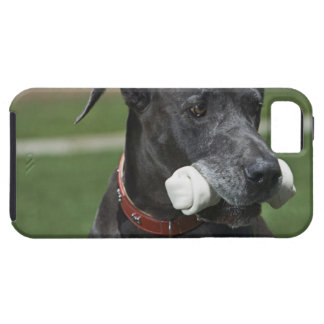 Great Dane with bone iPhone SE/5/5s Case