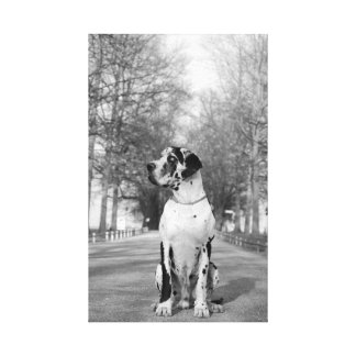 Great Dane Wrapped Canvas