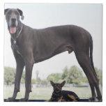 Great dane y pequeño perro de la mezclado-raza teja cerámica