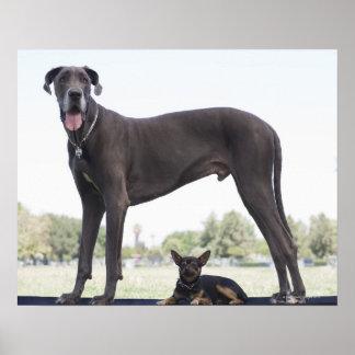 Great dane y pequeño perro de la mezclado-raza impresiones