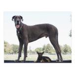 Great dane y pequeño perro de la mezclado-raza tarjeta postal