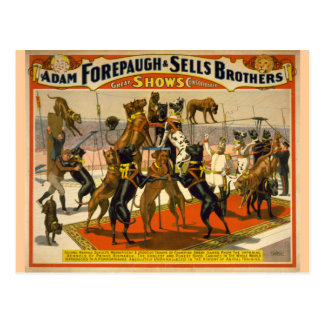 Great Danes / Dogs Circus Poster Post Cards