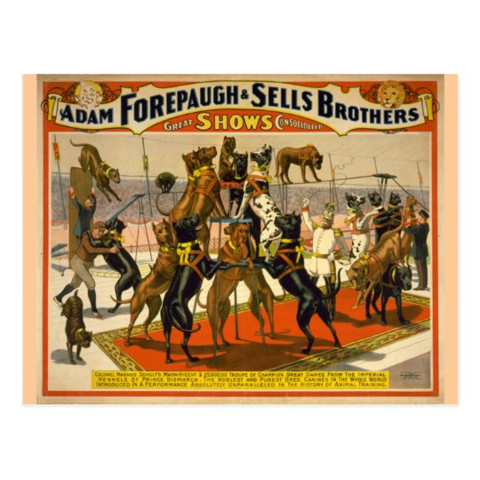 Great Danes / Dogs Circus Poster Postcard