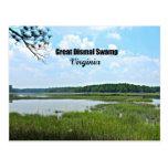 Great Dismal Swamp - Virginia Post Card
