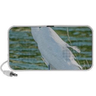 Great Egret 1 iPhone Speaker