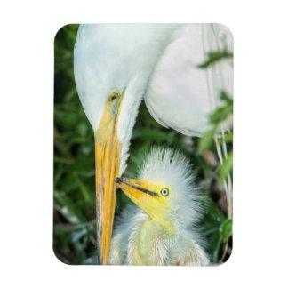 Great Egret and baby egret at Gatorland Vinyl Magnet