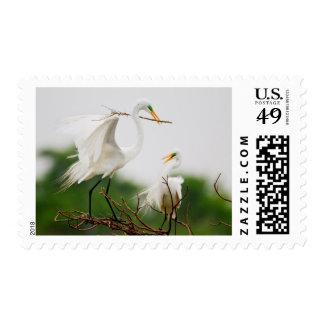 Great Egret (Ardea Alba) Breeding Activity Postage Stamp