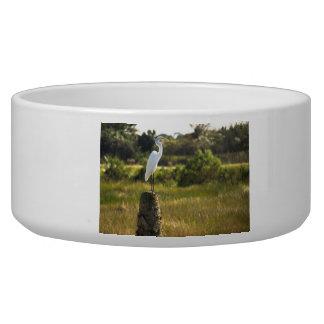 Great Egret at Viera Wetlands Pet Bowl