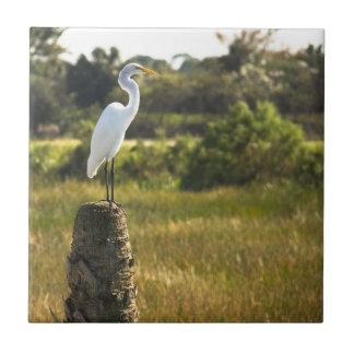 Great Egret at Viera Wetlands tile