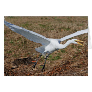 Great Egret Greeting Cards