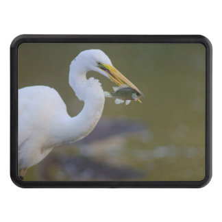 Great Egret eating a fFsh in Refugio Texas Hitch Cover