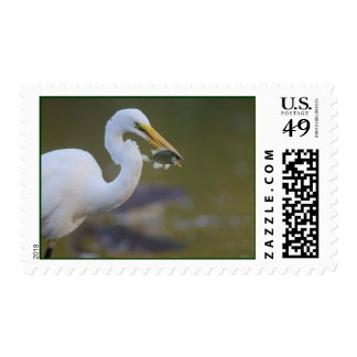 Great Egret eating a fFsh in Refugio Texas Postage
