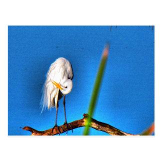 Great Egret HDR Photograph Postcard