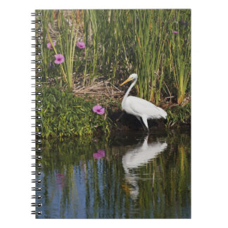 Great Egret hunting fish in freshwater marsh Notebook