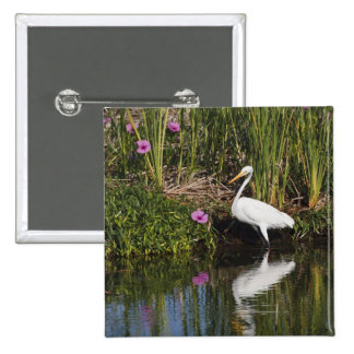 Great Egret hunting fish in freshwater marsh Pinback Button