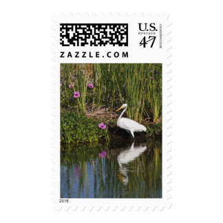 Great Egret hunting fish in freshwater marsh Postage Stamp