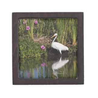 Great Egret hunting fish in freshwater marsh Premium Trinket Box