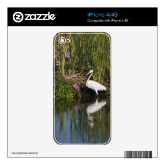 Great Egret hunting fish in freshwater marsh iPhone 4 Decal