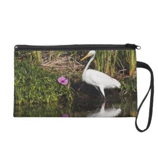 Great Egret hunting fish in freshwater marsh Wristlet Purse