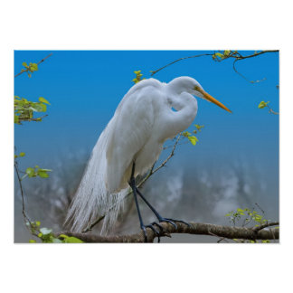 Great Egret in a Tree Poster
