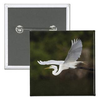 Great Egret in flight, Casmerodius albus, Button