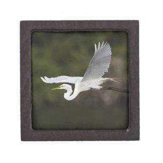 Great Egret in flight, Casmerodius albus, Premium Jewelry Box