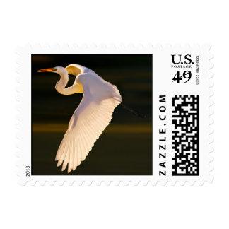 Great Egret in Flight Postage Stamp