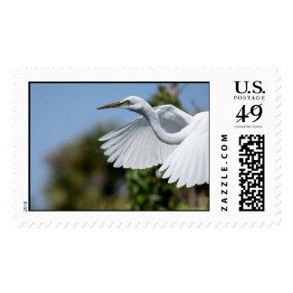 Great Egret Postage Stamps