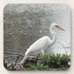 Great Egret  strolling Coasters